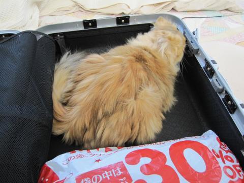 20110122002居座るネコ