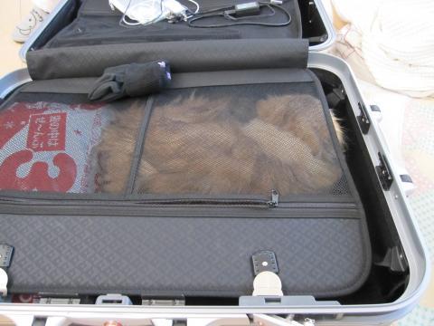 20110122003居座るネコ