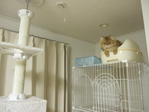 20110130002懲りないネコ