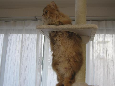 20110219002直立不動猫