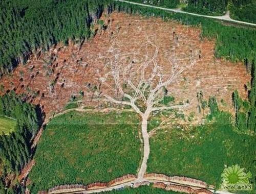 伐採で生えた樹