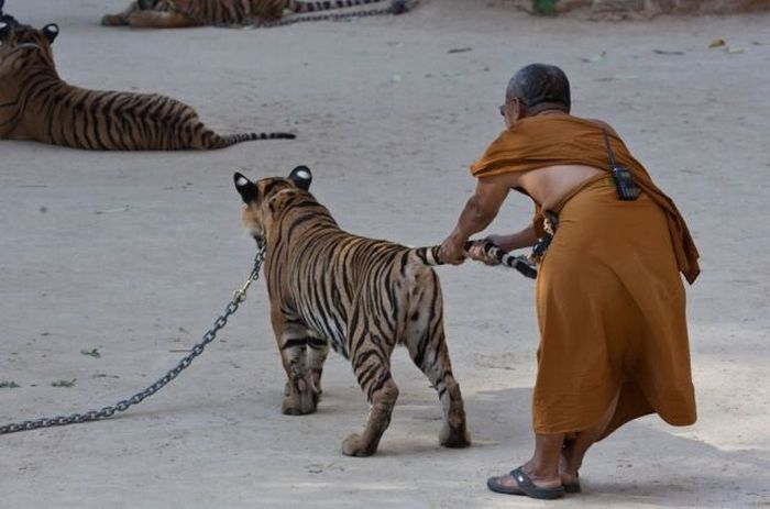 トラの尻尾を引っ張らないで下さい