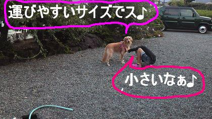 観察される犬w
