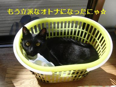 立派な黒猫ちゃんだよ!