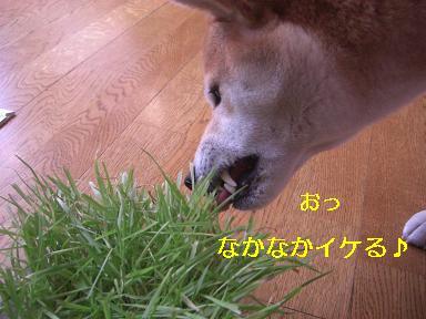 ハルの草だよ~