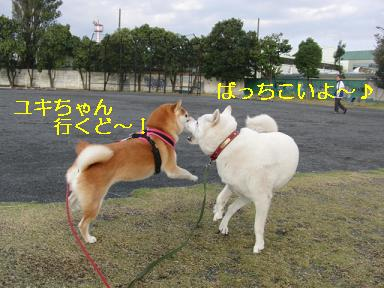 ユキちゃん行くよ~!