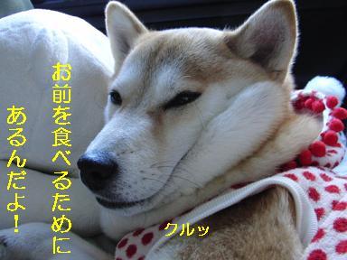 ひょえ~~!オオカミや~ん!