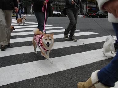 もも歩きます!