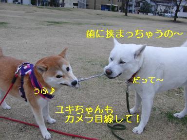 ユキちゃんと引っ張りっこ!