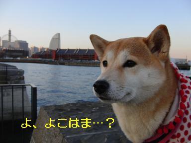 横浜なのよ~!