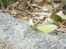 10.21落ち葉 のリサイズ画像