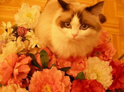 ムーとお花2