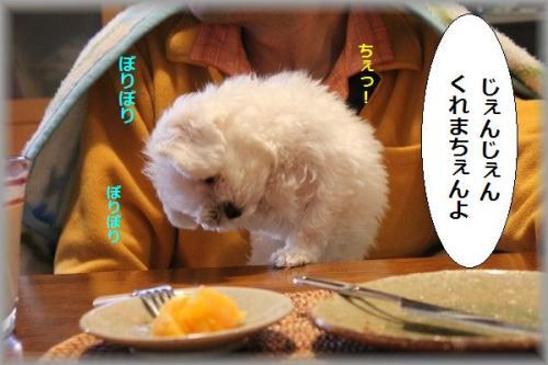 11.1.30ぼりぼり 1