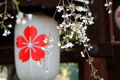 平野神社DSCF1561