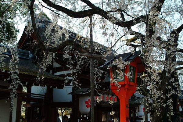 平野神社DSCF1557