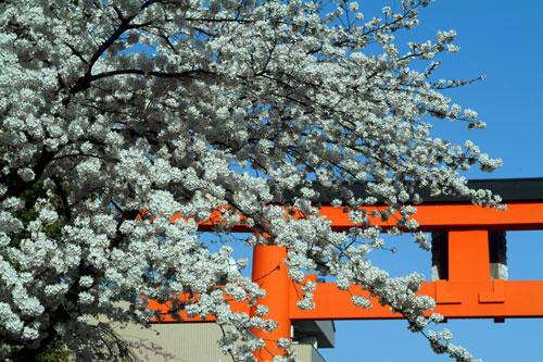平野神社DSCF1573