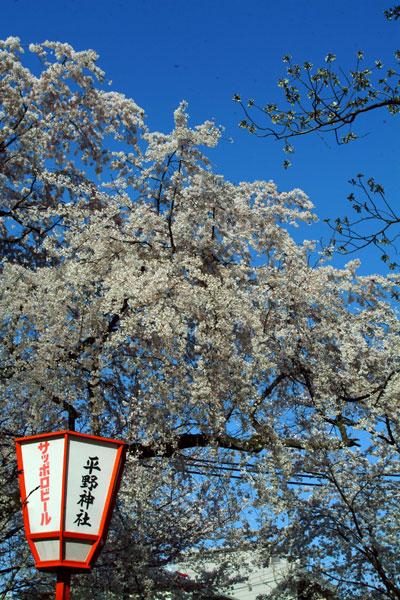 平野神社DSCF1605