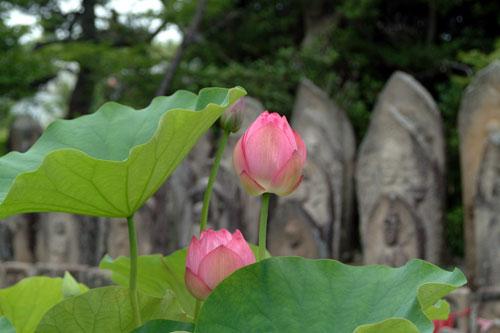 kikouji5
