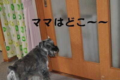 ぴあちゃん