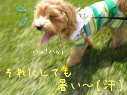 暑いっつのー(怒)