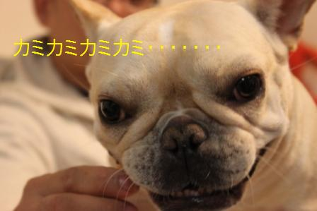 IMG_4065 鶏顔3