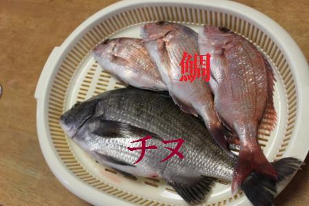 IMG_4438 魚