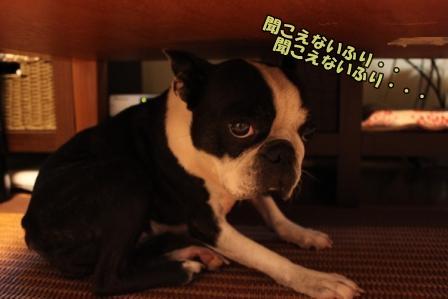 ちゃこ避難2