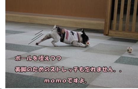 momoたん