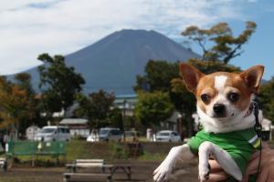 富士山ともん