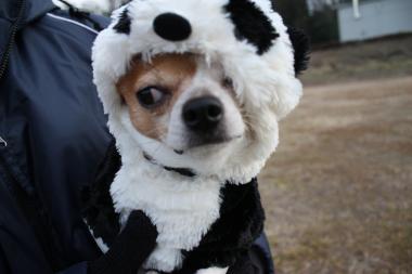 パンダもん6