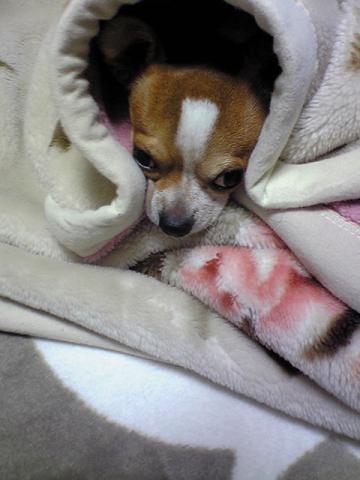 毛布もん2
