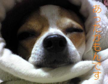毛布もん1