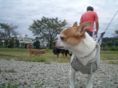 コタ散歩4