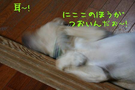 画像 094
