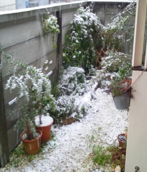2013 1 14 garden 2