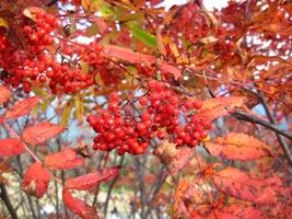 山の秋模様