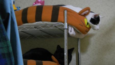猫ベットとミスター