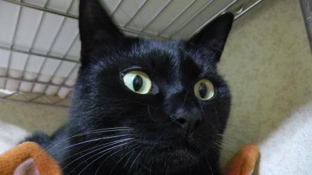 猫ベットとミスター5