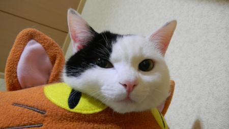 猫ベットとミスター2