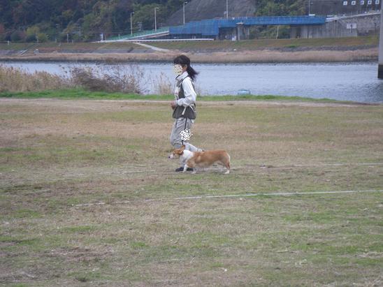 11/29茶々服従4