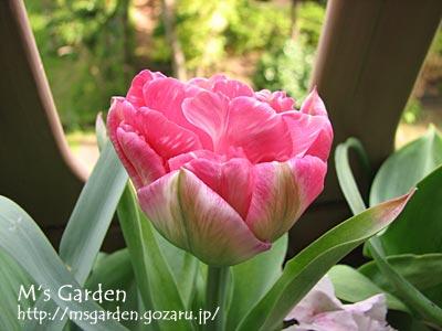 2010-04-30-15.jpg