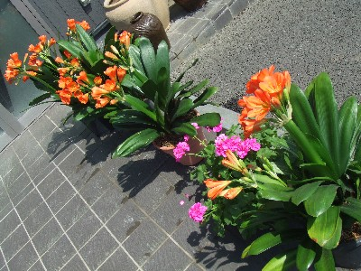 2010_0330花1