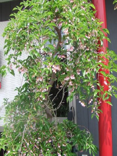 2010_0522花1