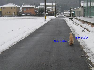 20090104_7.jpg