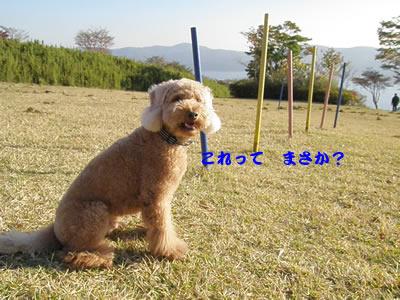 20091106_10.jpg