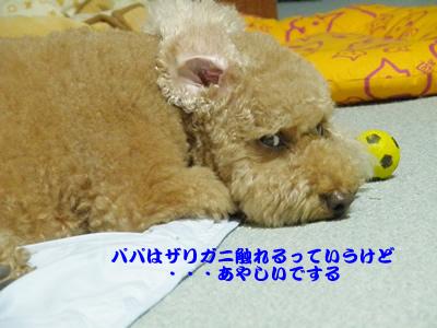 20091111_10.jpg