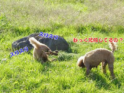 20091115_7.jpg