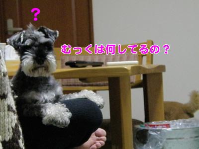20091121_7.jpg