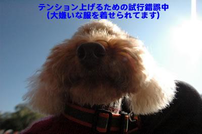 20091201_10.jpg