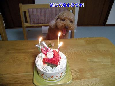 20091224_15.jpg